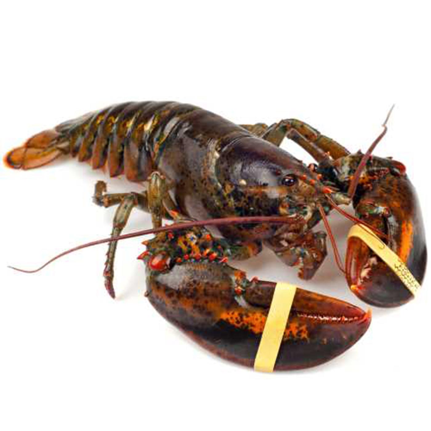Maine Lobster Order Online - Best Lobster 2018